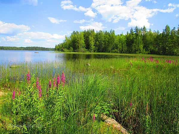 Port Paye Finlande
